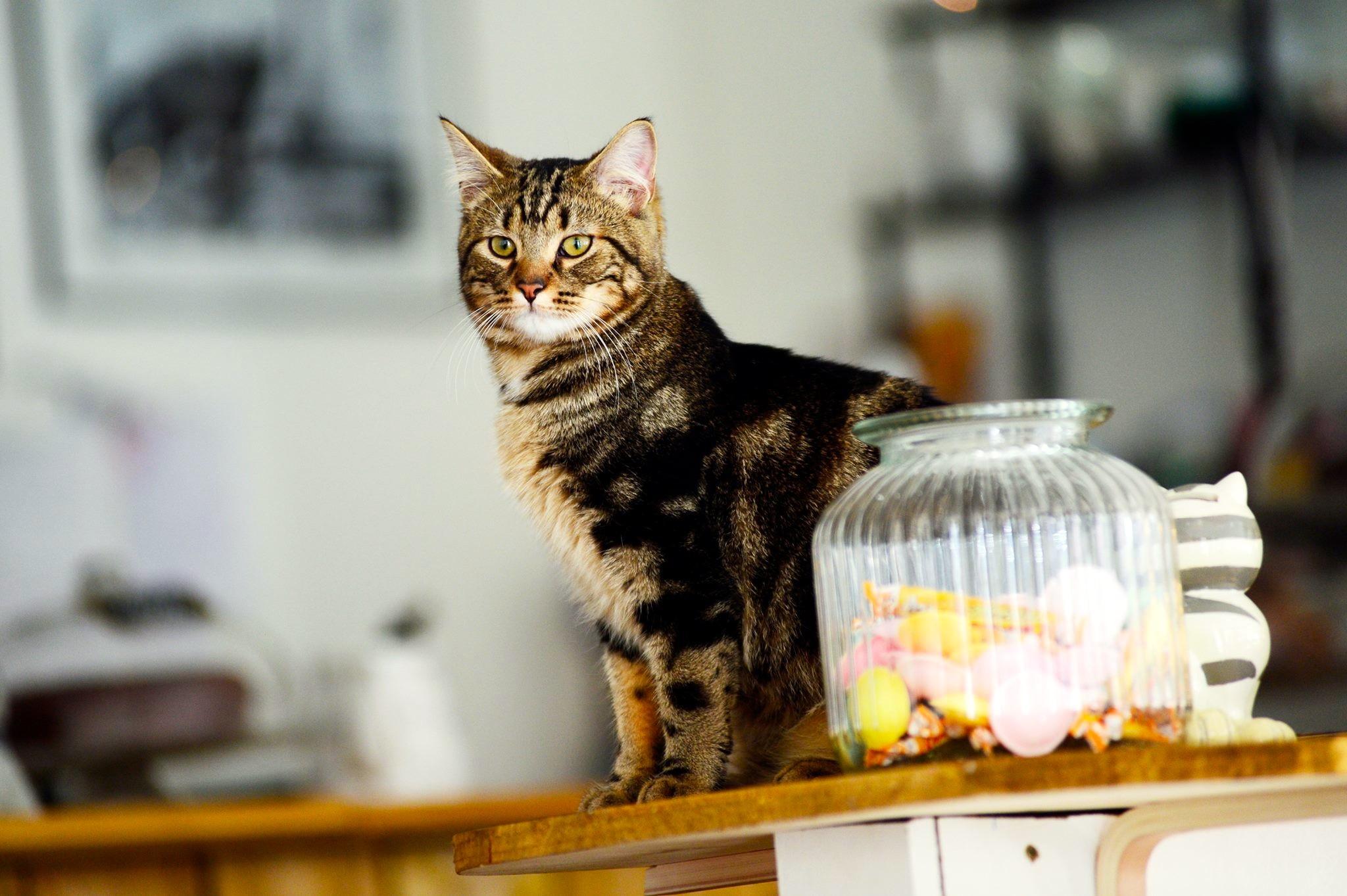 Chat voir vivre Lille
