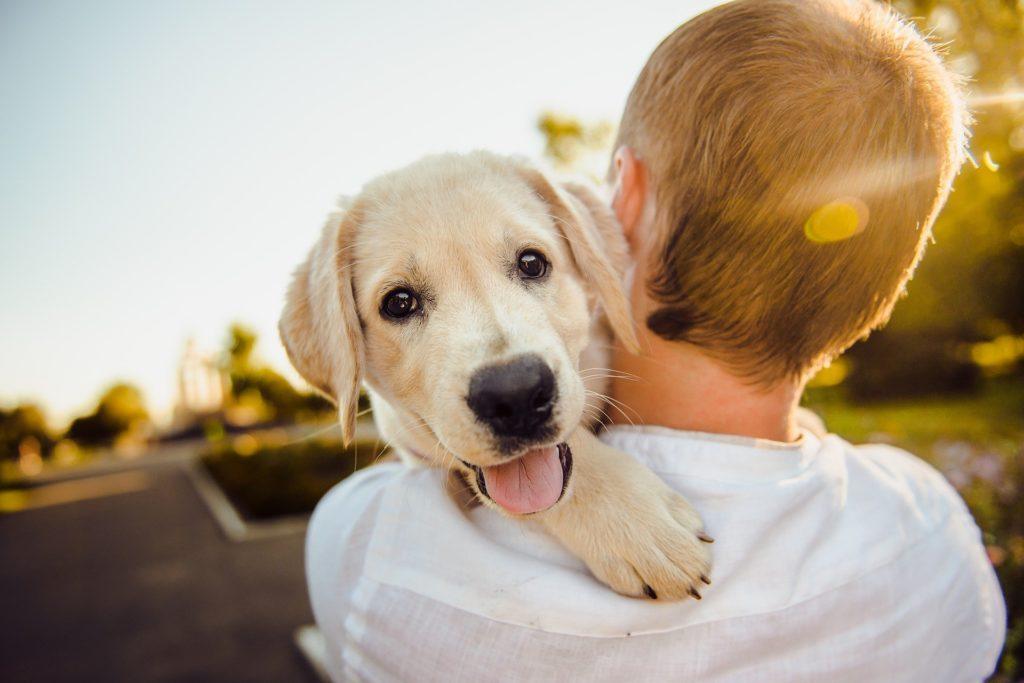 7 comptes Instagram canins qui nous donnent envie d'avoir un chien